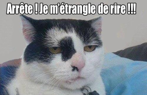 chat-mort-de-rire-_n